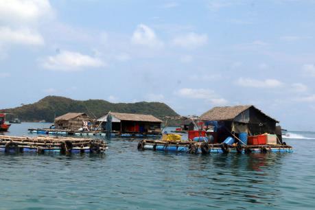 Bà Rịa-Vũng Tàu: Cá nuôi lồng bè ở xã đảo Long Sơn lại chết