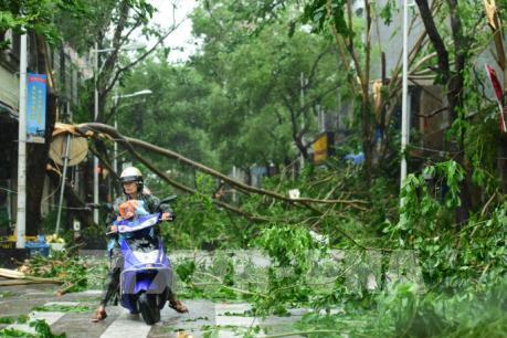 Bão Sarika gây thiệt hại nặng nề tại Philippines và Trung Quốc