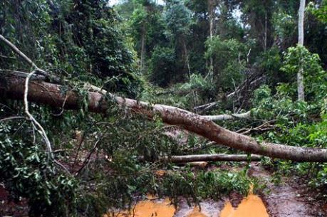 Đắk Nông: Khẩn trương cấp cứu người bị thương trong vụ nổ súng tranh chấp đất rừng