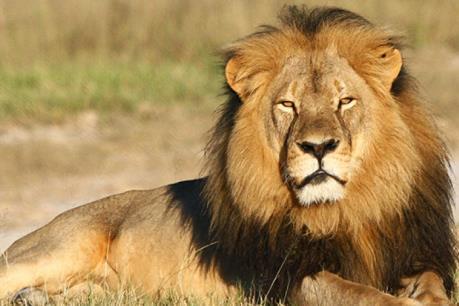 Hoạt động sản xuất của con người đang tác động mạnh tới động vật hoang dã
