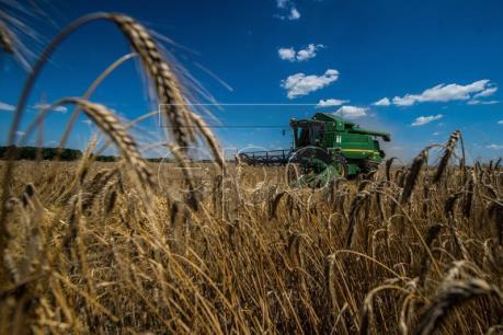 Nhiều yếu tố chi phối diễn biến thị trường hàng hóa nguyên liệu cuối năm