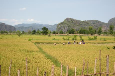 Lào đặt mục tiêu sản xuất 5 triệu tấn gạo trong năm 2020
