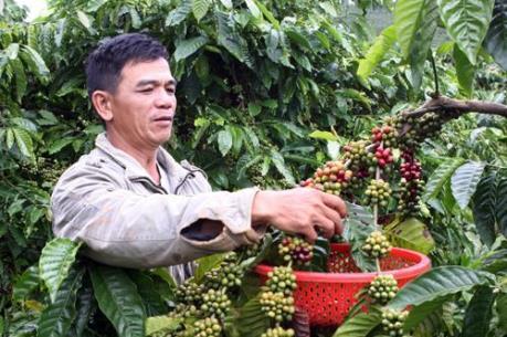 Tín hiệu vui từ ngành cà phê Việt Nam