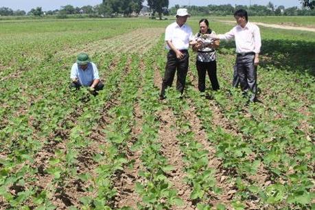 Nâng cao giá trị sản xuất vụ Đông từ cây trồng mới
