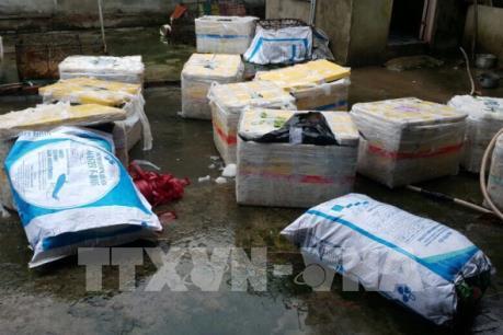 Bình Dương phát hiện 600kg lợn sữa bốc mùi hôi thối không giấy kiểm dịch