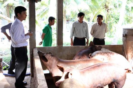 Thịt lợn rớt giá khiến người chăn nuôi gặp khó