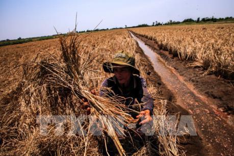 Ban hành Nghị định về hỗ trợ nông dân bị thiệt hại do thiên tai, dịch bệnh