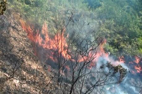 Cháy rừng keo ở thành phố Cẩm Phả, Quảng Ninh