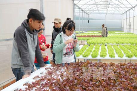 Tour du lịch vườn Đà Lạt hút khách dịp nghỉ Tết Dương lịch