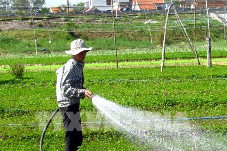 Người trồng rau, hoa Phú Yên thấp thỏm chờ Tết