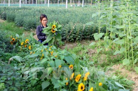 TP. Hồ Chí Minh lập trung tâm giao dịch hoa và cây cảnh