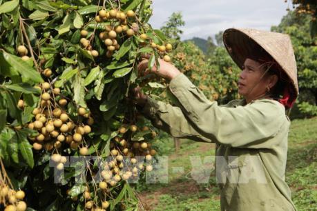 Nông nghiệp Hà Nội một năm vượt khó đầy ấn tượng