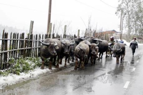 Nhiều khu vực vùng cao của Lào Cai có rét đậm, rét hại dưới 8 độ C