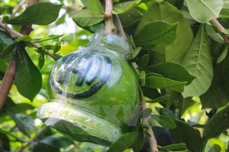 Trái cây tạo hình nổi, chữ nổi đắt khách dịp Tết