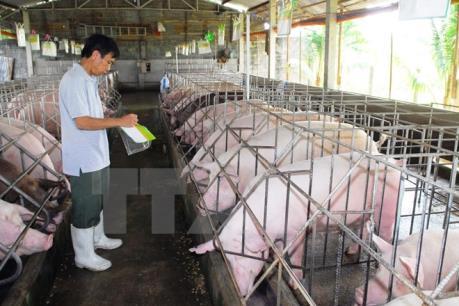 Bổ sung chất Cysteamine vào danh mục chất cấm trong chăn nuôi