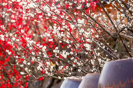 Những lễ hội hoa đầu năm tuyệt vời