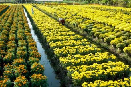 6 địa điểm ngắm hoa Tết đẹp nhất miền Tây