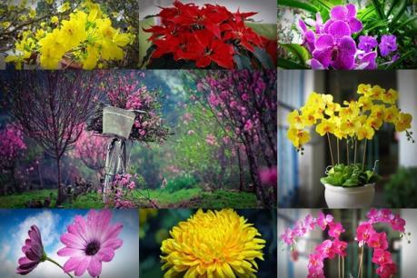 Ý nghĩa các loại hoa cảnh trưng Tết