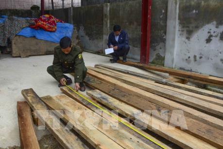 Điện Biên: Bắt giữ 4 xe tải chở gỗ trái phép