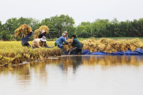 Ngã rẽ nào cho lúa gạo Việt Nam?