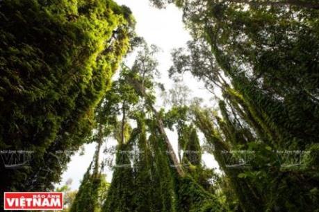 Không chuyển rừng tự nhiên ở Tây Nguyên sang mục đích khác