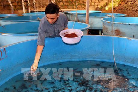 Lâm Đồng sản xuất trên 1 triệu con giống cá tầm mỗi năm