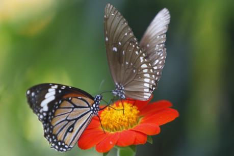 Triển lãm sinh động hơn 400 loài bướm sống tại Italy