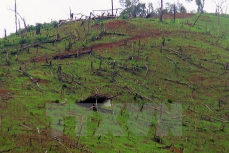 Giải quyết tình trạng phá rừng và di cư tự do ở Mường Nhé