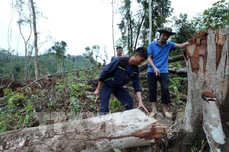 Giữ rừng ở Mường Nhé: Cuộc chiến gian nan