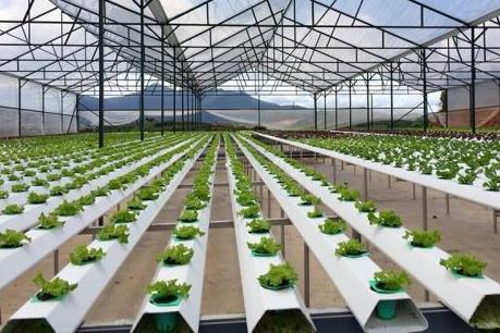 Hỗ trợ đầu tư nông nghiệp ứng dụng công nghệ cao
