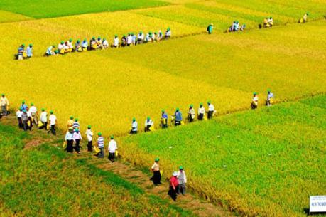 Tích tụ ruộng đất: Không làm theo phong trào
