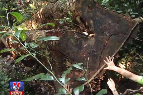 Xử nghiêm các sai phạm liên quan vụ phá rừng ở Vườn Quốc gia Ba Bể