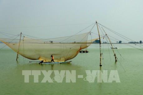 Hàng trăm vó cá xuất hiện bất thường trên lòng hồ Dầu Tiếng
