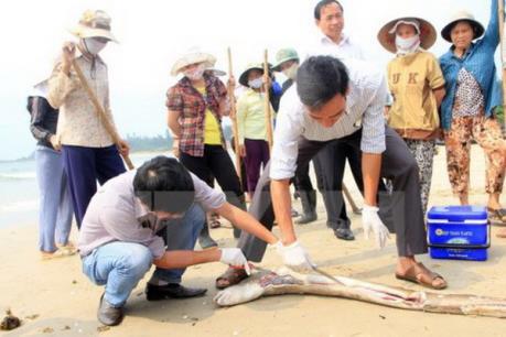 Kỷ luật một số cán bộ liên quan đến sự cố môi trường tại 4 tỉnh miền Trung