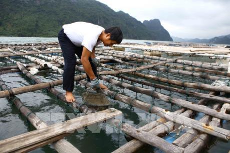 Bà Rịa-Vũng Tàu sắp xếp lại các cơ sở nuôi thủy sản lồng bè