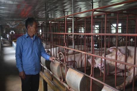 """""""Giải cứu"""" thịt lợn: Các siêu thị vào cuộc"""