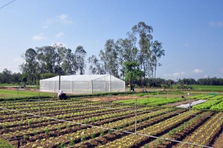 Quy định mới về cho vay phát triển nông nghiệp ứng dụng công nghệ cao, nông nghiệp sạch