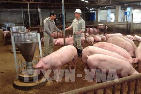 Bàn giải pháp tháo gỡ khó khăn cho người chăn nuôi lợn