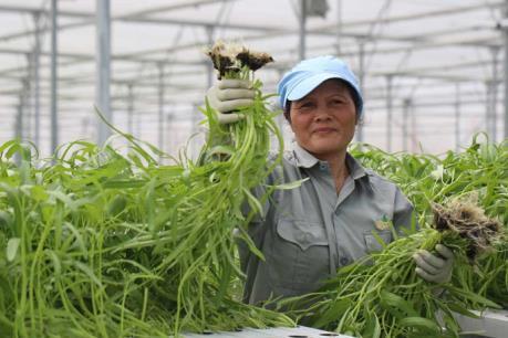 Cho vay nông nghiệp công nghệ cao, ngân hàng phải tính đến hiệu quả đầu tư