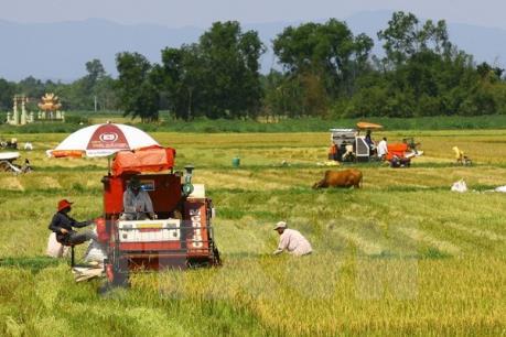 Năng suất lúa Đồng bằng sông Cửu Long đạt gần 63 tạ/ha