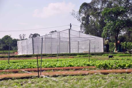 """Đầu tư vào nông nghiệp công nghệ cao - Bài 2: Để chính sách trở thành """"bà đỡ"""""""