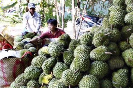 Giá trái cây ở ĐBSCL tăng cao