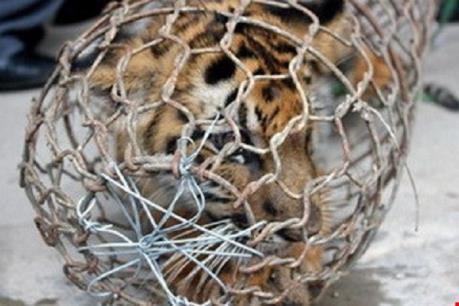 Triệt xóa một đường dây buôn bán, vận chuyển trái phép động vật hoang dã quý hiếm