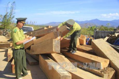 Ngành gỗ Việt Nam nói không với gỗ bất hợp pháp