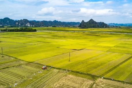 Tích tụ ruộng đất: Đi tìm phương thức ưu việt - Bài 3: Tìm phương thức tối ưu