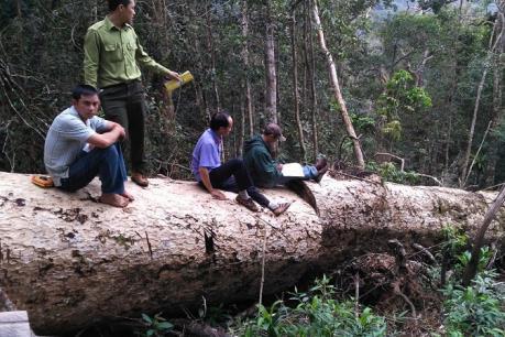 Khởi tố 3 đối tượng vi phạm các quy định về khai thác và bảo vệ rừng