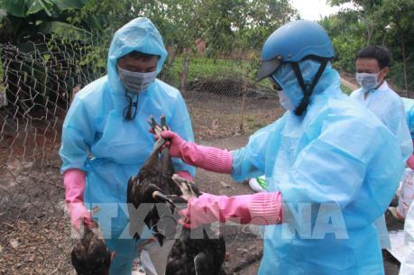 Cảnh giác với dịch cúm A/H7N9 trong thời tiết nắng nóng