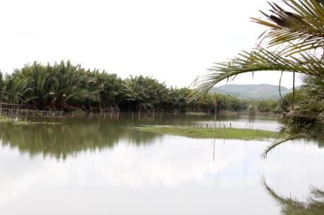 Bảo tồn, nhân rộng diện tích cây dừa nước