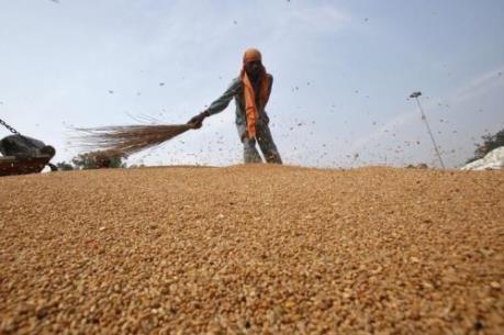 Giá lương thực, thực phẩm thế giới giảm do ảnh hưởng dịch COVID-19