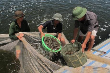 Tiền Giang phát triển nuôi thủy sản xuất khẩu vùng ven biển